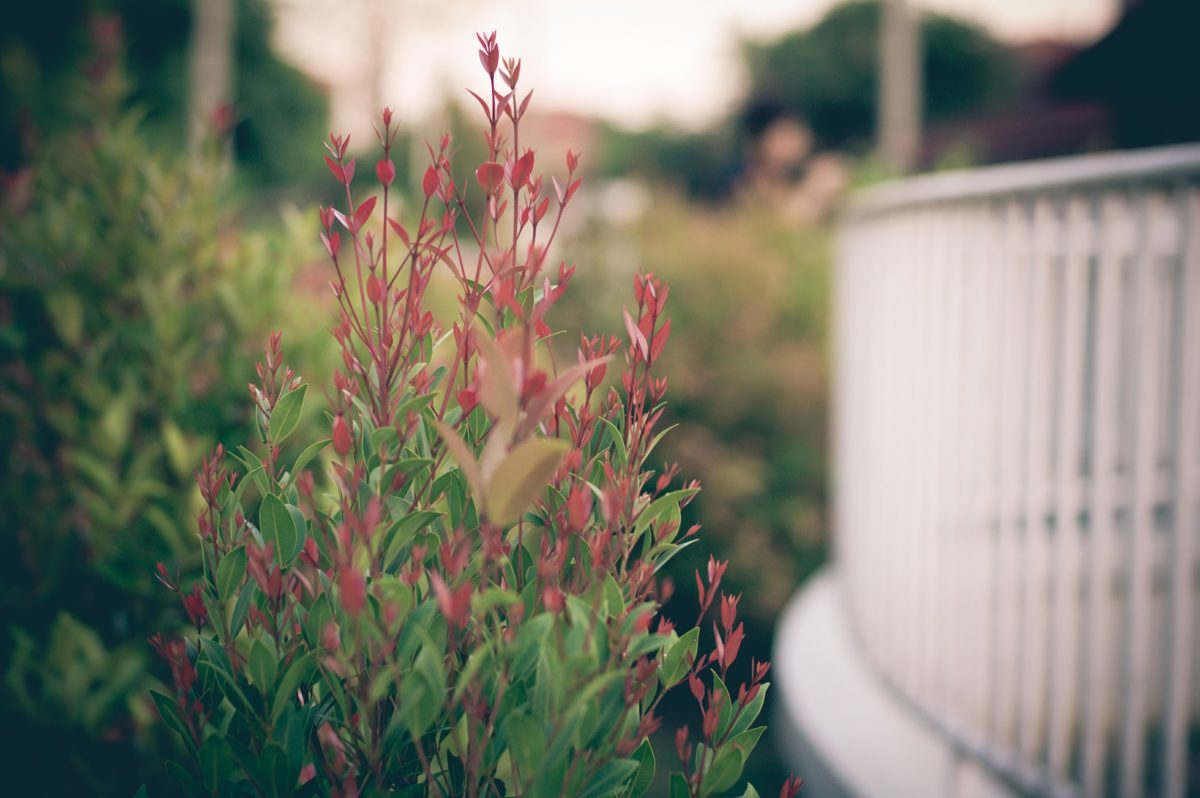 Rockport Gardening Tips