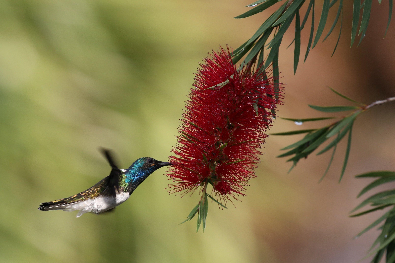 hummerbird festival 2019